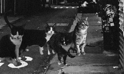 """""""Kedi metal"""" grubu Cattera'nın ilk şarkısı yayımlandı"""