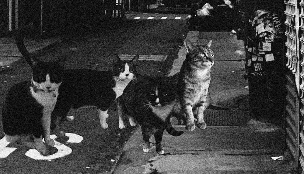 Rüyada kedi görmek ne anlama gelir? Rüyada yavru kedi görmek anlamı