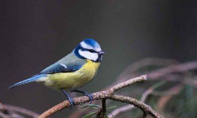 """Kuşların kanının soğuk havalarda """"merkezi ısıtma sistemi"""" görevi gördüğü keşfedildi"""