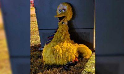Susam Sokağı hırsızlığı: 160 bin dolarlık Minik Kuş kostümünü çalanlar yakalandı