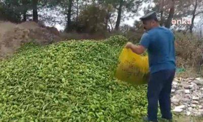 Antalyalı çiftçi, ürettiklerini ormana döktü: Mahvolduk. Hiç olmazsa kurt kuş yesin