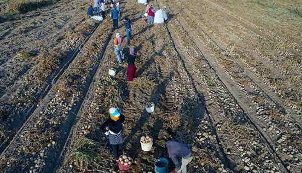 Bakan Pakdemirli: Tarım işçilerimiz kademeli olarak aşılanacak