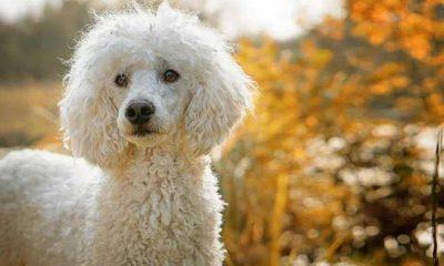 Bir milyon euro çalıp kendini ölmüş gibi gösteren kadını köpeği ele verdi