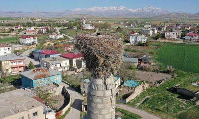 Çiçekli köyü camisindeki yuva leyleklerin 62 yıldır değişmeyen adresi oldu