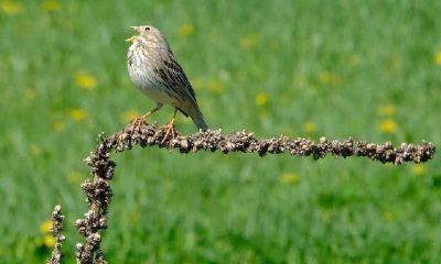 Doğu Anadolu'nun kuş cennetlerinde bir günde 170 türden göçmen kuş sayıldı