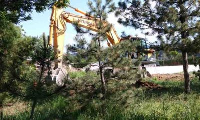 Eskişehir'de düğün salonu için lise bahçesindeki ağaçları kestiler!