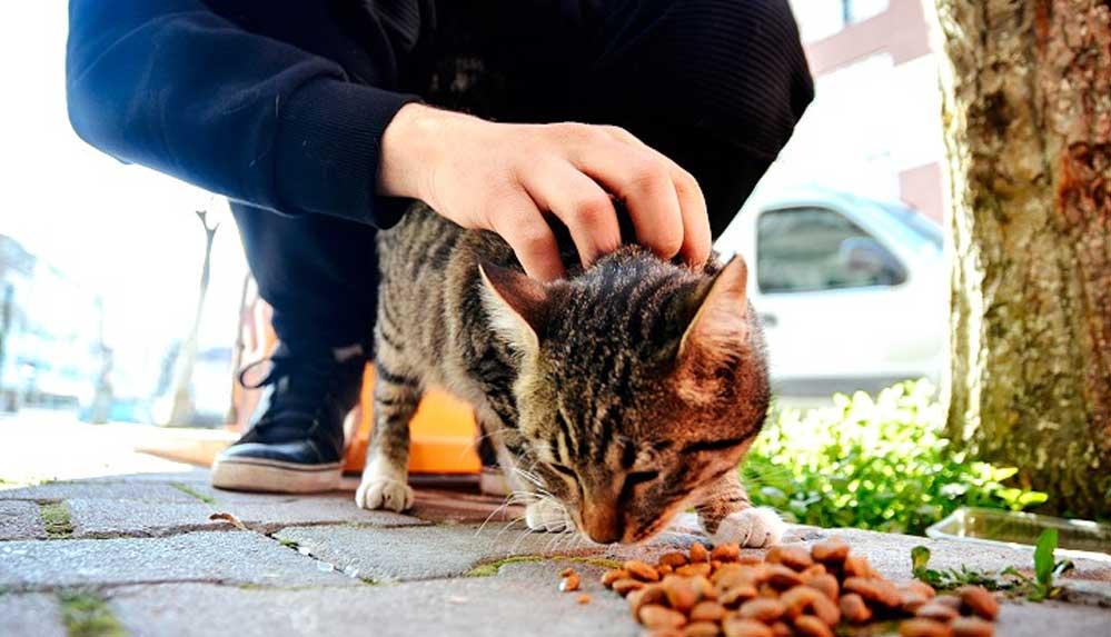Hayvansever lise öğrencisi harçlıklarıyla sokaklardaki 'can dostları'nı besliyor