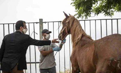 İBB'den Adalar'ın 'kayıp at'larıyla ilgili açıklama