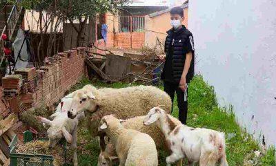 İzmir depreminde enkaz altından 10 saat sonra kurtarılan Günay doğayla iç içe bir yaşam kurdu
