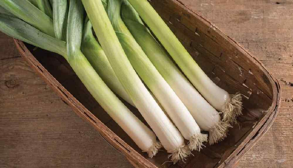 Kabızlığa iyi geliyor: Pırasa salatası