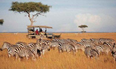 Kenya, vahşi doğadaki tüm canlıları tek tek sayacak