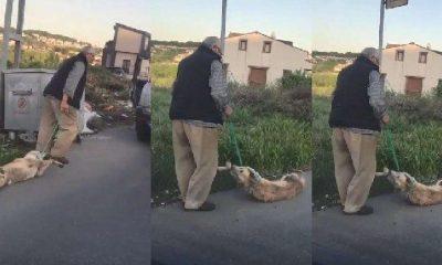 Köpeği boğazından bağlayarak sürükledi: Serbest bırakıldı