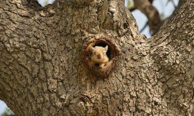 Kütahya'da sincaplar boş kalan parkta sakinliğin keyfini çıkardı