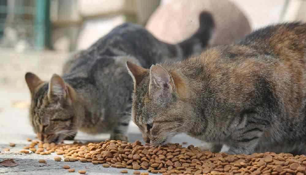 Maltepe Belediyesi sokak hayvanları için 1 ton mama dağıtacak