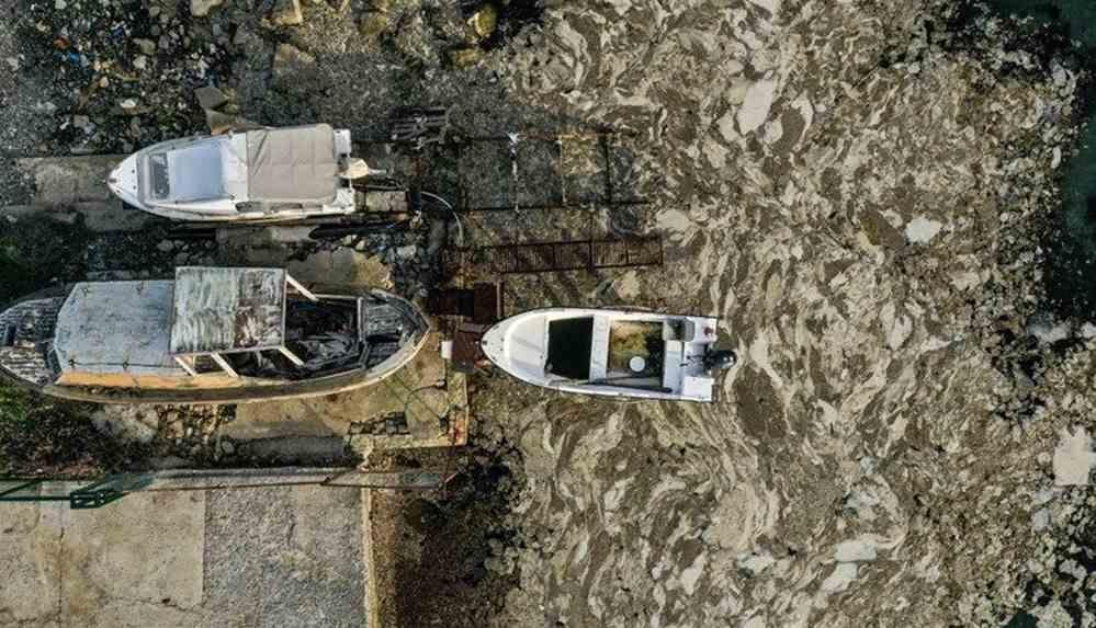 CHP'den deniz salyası için Meclis araştırması talebi