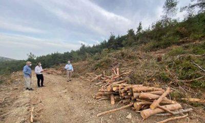 Mersin'de orman katliamı