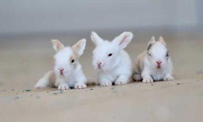 Öğretmenlerin okul bahçesinde beslediği 9 tavşan yavrusu özel öğrencilerin maskotu oldu