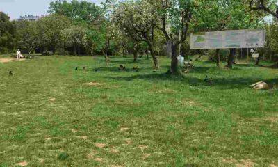 Üsküdar Belediyesi Validebağ Korusu'nu rant ve talana açılıyor: 500 araçlık otopark