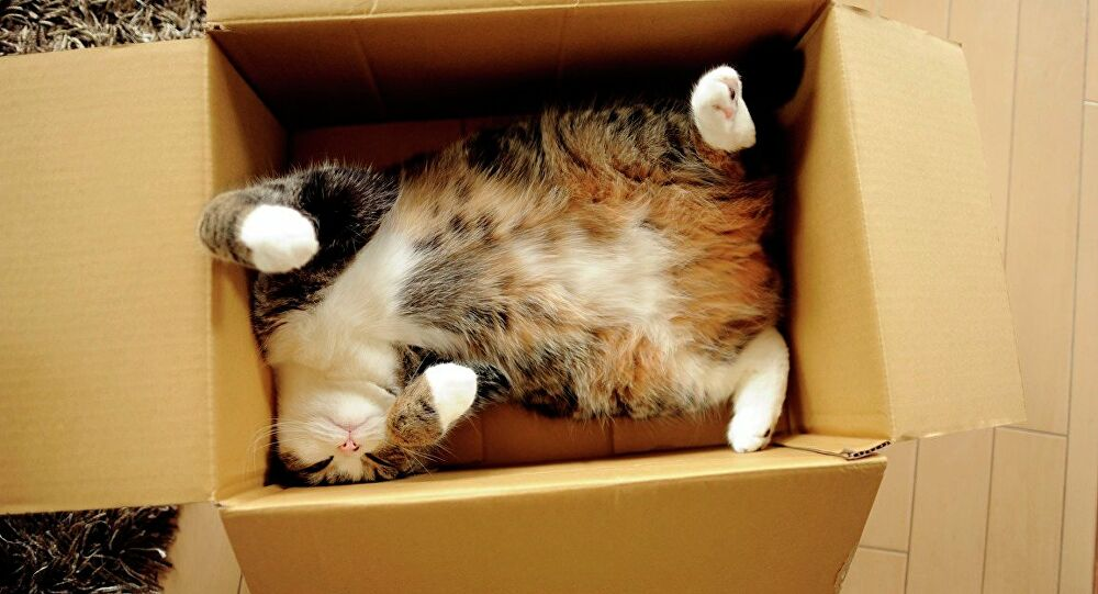 """Kedilerin kutu sevgisi bilimsel araştırma konusu oldu: """"Hayali kutularda bile oturuyorlar"""""""