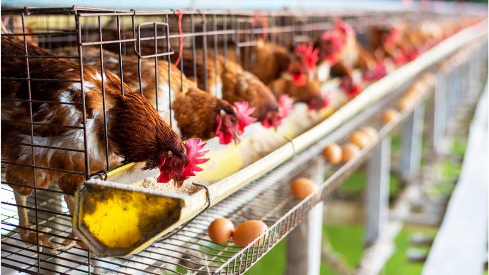 Hollanda'da yeni hayvan hakları yasası kabul edildi