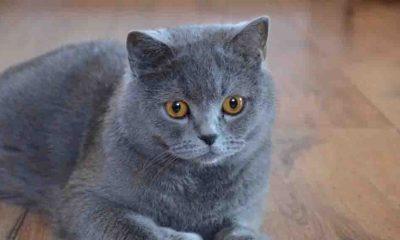 3 ay sonra evinde ölü bulundu: Evcil kedileri belden yukarısını yemiş