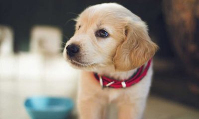 ABD'de 100'den fazla ülkeden köpek ithalatı yasaklandı
