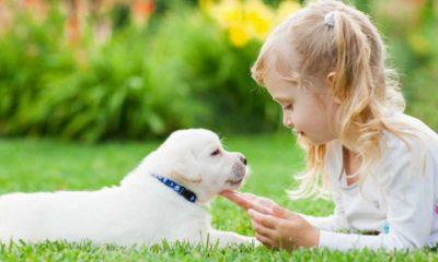 Araştırma: Köpekler doğdukları andan itibaren insanları anlayabiliyor