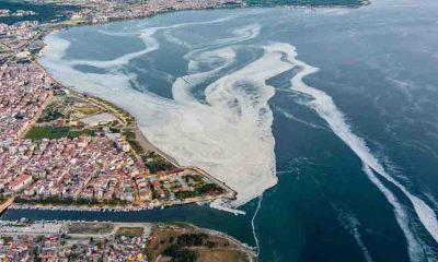 Deniz salyası, Ege Denizi'ne akmaya başladı