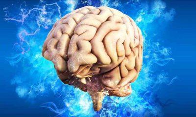 En fazla ortak noktaya sahip iki organ belirlendi: Beyin ve testisler