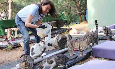 Kendisini sokaktaki sahipsiz kedilerin bakımına adadı