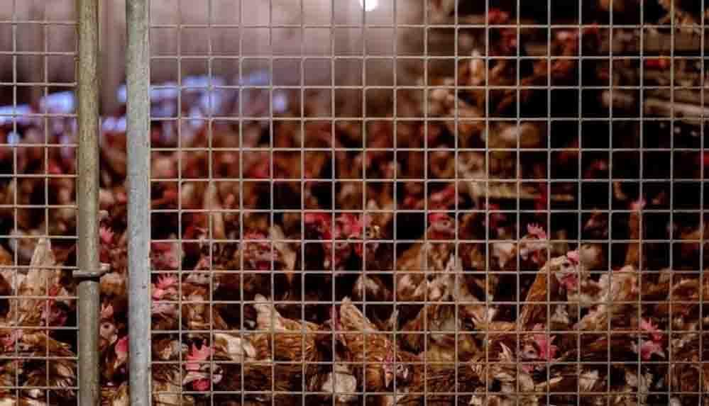 Kuş gribi nedir? H10N3 türü kuş gribi hakkında neler biliniyor?