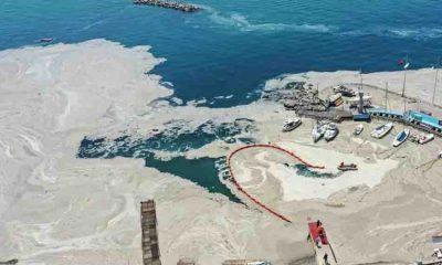 Prof. Dr. Sarı'dan müsilaj uyarısı: 'Yüzeyi temizledik ama denizin altında devam ediyor'