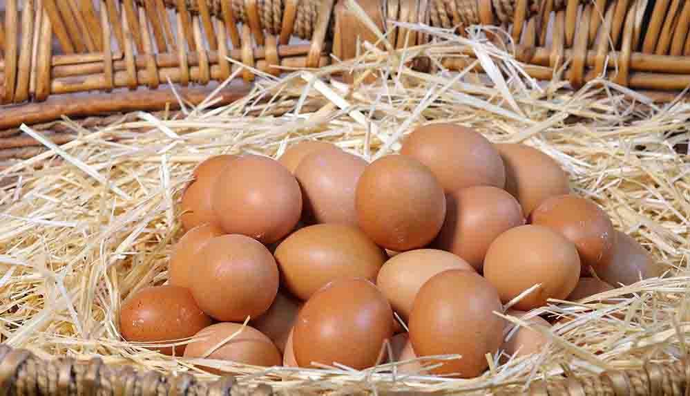 Organik yumurta nasıl ayırt edilir? Organik yumurta kodu kaçtır?