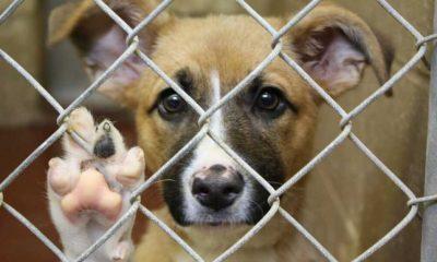 'Save a dog' bağışı nedir, nasıl yapılır?