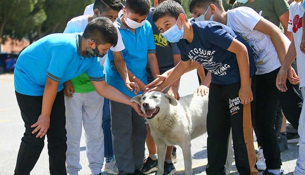 Sığındığı okul yuvası olan 'Cengo' kademeli normalleşme sonrası öğrencilerle buluştu