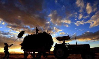 Türkiye'de çiftçi sayısı son 12 yılda yüzde 48 azaldı