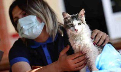 Yangında kurtarılan kediyi İzmir itfaiyesi sahiplendi