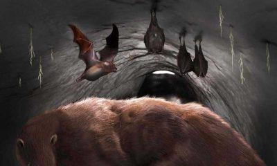 100 bin yıl önce yaşamış dev vampir yarasanın kalıntıları keşfedildi