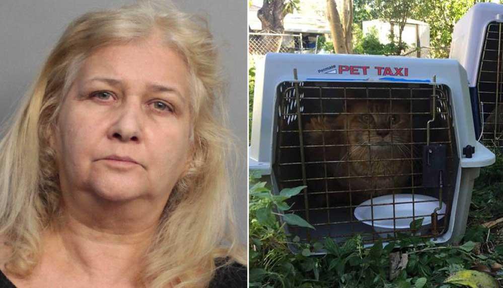 ABD'de kedileri aç bırakıp işkence eden kişiye hapis cezası