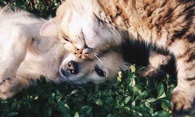 Araştırma ortaya çıkardı: Covid-19 evcil kedi ve köpeklerde yaygın görülüyor