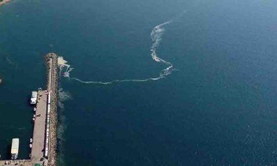 Bakan Kurum: Marmara'da müsilaj yok denecek kadar az, denize girilip balık yenebilir