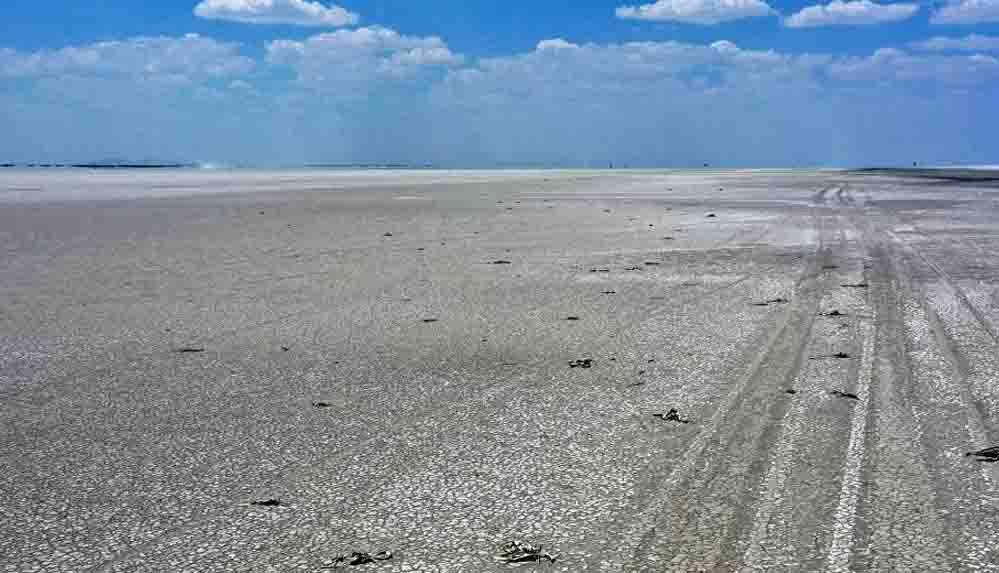 Bakan Pakdemirli: Tuz Gölü'nde bin kadar yavru flamingo öldü, ilk tespitlere göre zehirlenme yok