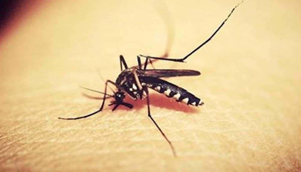 Batı Nil Virüsü nedir? Batı Nil Virüsü belirtileri ve tedavi yöntemleri nelerdir?