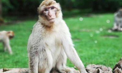 """Çin'de """"Monkey B"""" virüsü nedeniyle ilk ölüm gerçekleşti"""