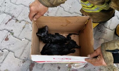 Esenyurt'ta itfaiye erleri yangın çıkan binadan kedileri son anda kurtardı