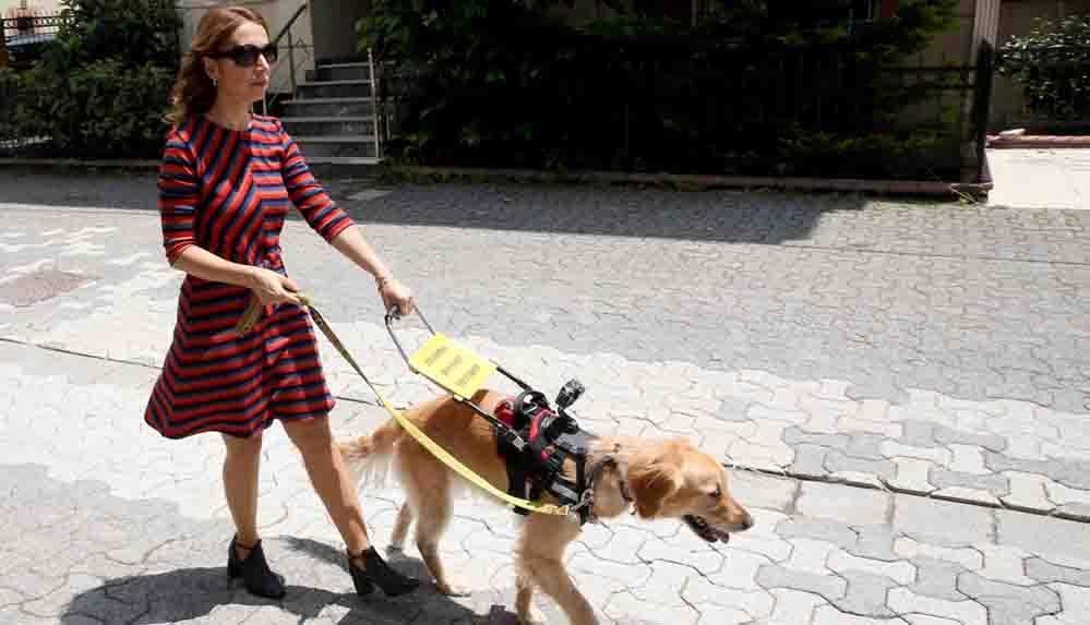 Görme engelli öğretmen, rehber köpeğiyle artık daha özgürce dolaşabiliyor