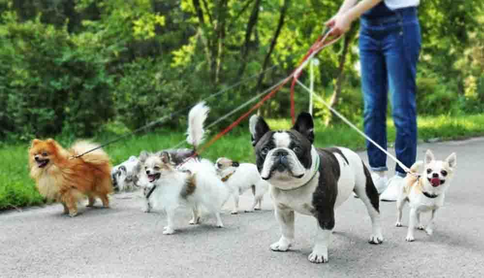 Köpek dışkılarını yerde bırakan sahipleri için DNA'lı çözüm