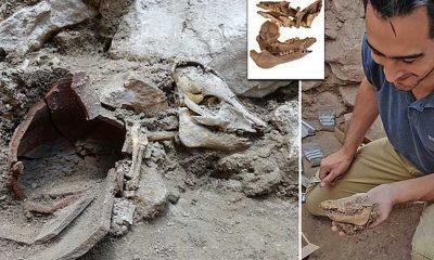 Kudüs'te 2 bin 700 yıllık domuz iskeletine rastlandı
