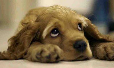 Normalleşme sonrası köpekler terk edilme korkusuyla baş başa