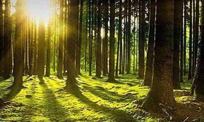 Ormanlık alanlar çocukların akıl sağlığı ve bilişsel gelişimi için önemli rol oynuyor